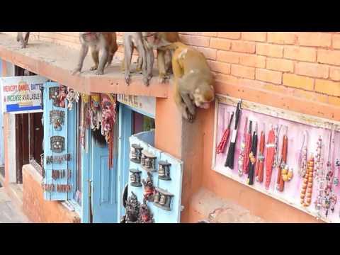 加德滿都 四眼天神廟 MONKEY TEMPLE KATHMANDU NEPAL