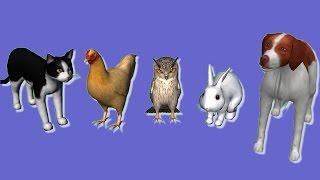 Animais para crianças #1 - Aprenda os nomes e sons dos animais em Português