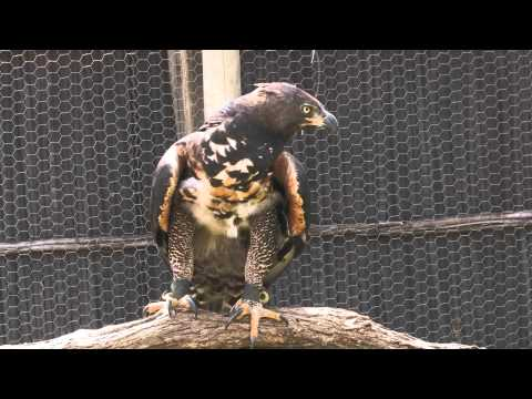 Wildlife Rehabilitation Centre – South Africa Travel Channel 24