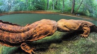 13 Weirdest Looking Amphibians