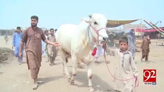 Raju bull shining in Peshawar's livestock market - 7 August 2018 - 92NewsHDUK