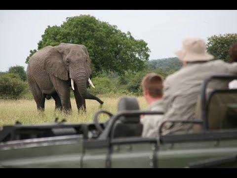 Kruger Park Safari: Feeling Like a King