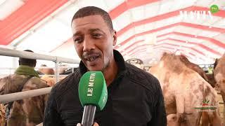 Matin TV en direct du SIAM : découvrez l'élevage des dromadaires