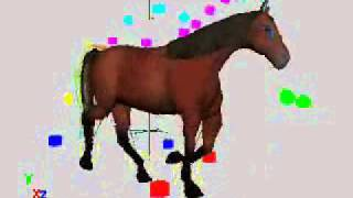 Horse Animation - Walk, trot, canter, gallop - Work In Progress