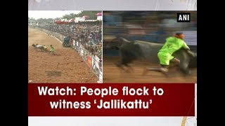 Watch: People flock to witness 'Jallikattu' - Tamil Nadu News