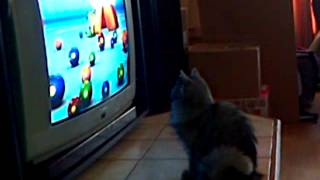 dina watches baby tv