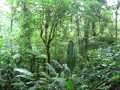 The forest primeval at Selva Negra
