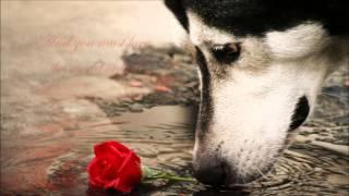 The Alan Parsons Project - Destiny HD