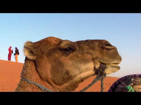 モロッコ サハラ砂漠ツアー ラクダ