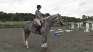 Horse Care & Buying Tips : How to Canter on Horseback