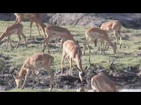 The WOW! Travel Club 2008 – Africa – Highlight Reel