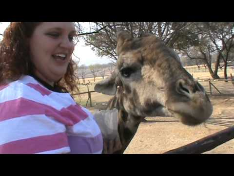 Marley Feeds a Giraffe
