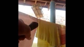 Armadilha de laço para pegar pássaros