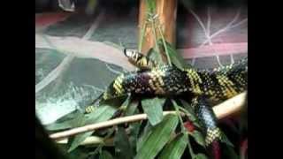 Camara lenta de una serpiente