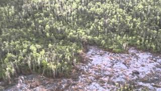 Tekoucí láva z Kilauea spaluje deštný prales