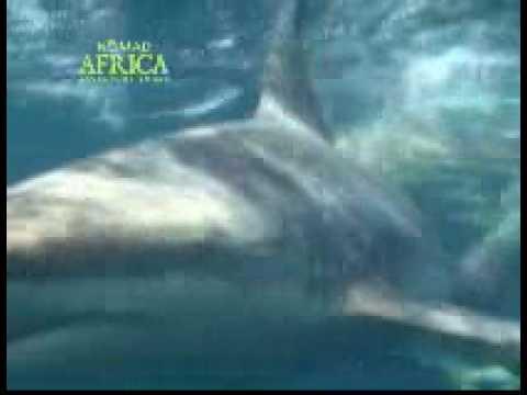 South African Dive Tour.wmv