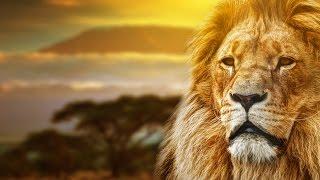 Lion King Remake - Circle of Life -Michael Barbera