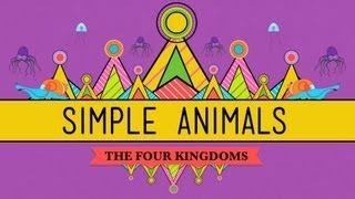 Simple Animals: Sponges, Jellies, & Octopuses - Crash Course Biology #22