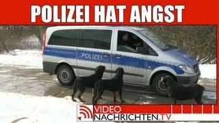 Nachrichten: Wachhunde blockieren Polizei und lassen Diebe laufen   VideonachrichtenTV