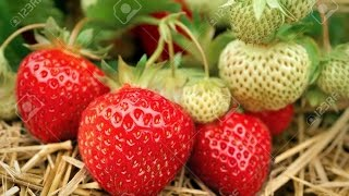 ليه لا يوجد فاكهة لونها أزرق؟ why there are no Blue fruits?