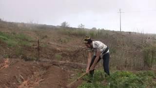 4Litro - A arte de cavar