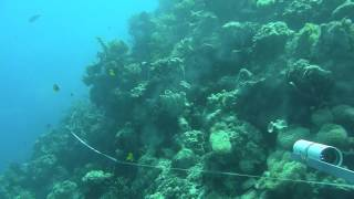 Stereo-Video System - Coral Reef Fish Transect