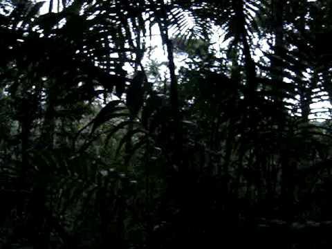 Bird Sounds Nicaragua