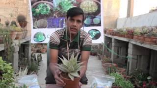 D A P & N P K Fertilizer how to use width=