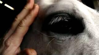 HOW TO HORSE WHISPER ASMR