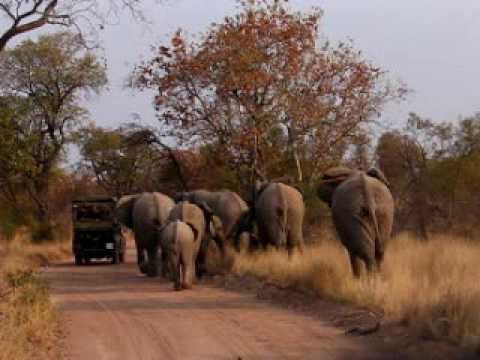 South Africa 2005 – Elephant