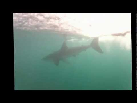Tim Charody Dives with Sharks