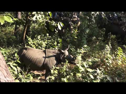 Rhino during elephant safari, Nepal (Chitwan)