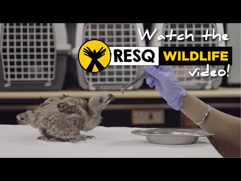 Wildlife Rescue Work done by RESQ