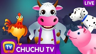 Farm Animals, Wild Animals & More ChuChu TV Surprise Eggs Learning Videos - Live Stream