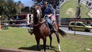 Keoma Stallion rappresentation on easter days [GOPRO HERO3+ NIKON D3200]