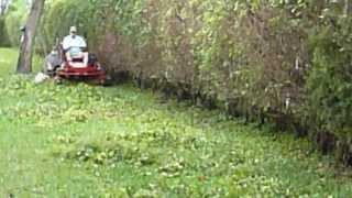 Vulcher mulching hedge