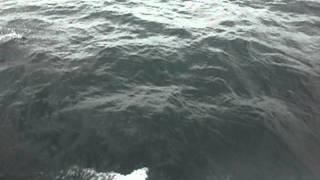 Delfines y Mantarraya