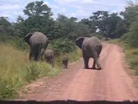 Elefantes cruzando nuestro camino en Parque Kruger