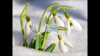 Drazsé: Hóvirág