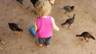 Criança 1 ano pegando frango