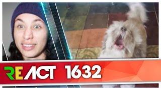 React 1632 Linkin Park - Numb (Animal Cover) [Insane Cherry]