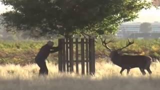 Animal Fights to Death 2016 ❤❤❤ Bear vs Human vs Rhino