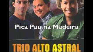 Pica Pau na Madeira