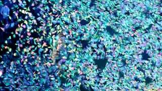 COLDPLAY - In My Place - Berlin 21/12/2011