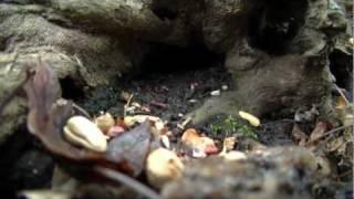 Lil Root's Playground (sneak Peek)