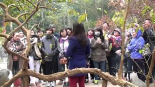 """cây ổi """"cười"""" ở khu lăng vua Lê Lợi thuộc khu du lịch Lam Kinh, Thanh Hóa"""