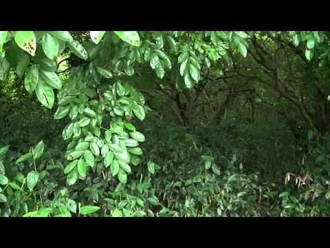Ratargul Swamp Forest Beautiful Bangladesh Sylhet