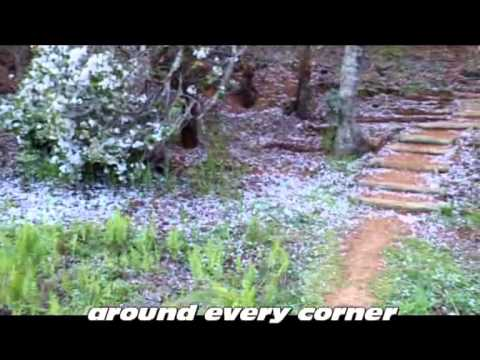 Cherry blossom festival, Cheerio Gardens, South Africa..wmv