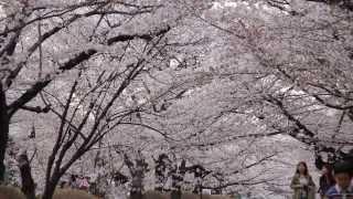 Kansai Gaidai Study Abroad Teaser