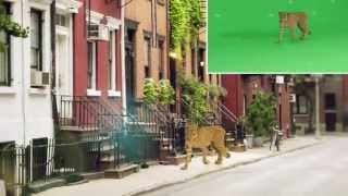 GreenScreen Animals - Behind the Scenes